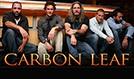 Carbon Leaf