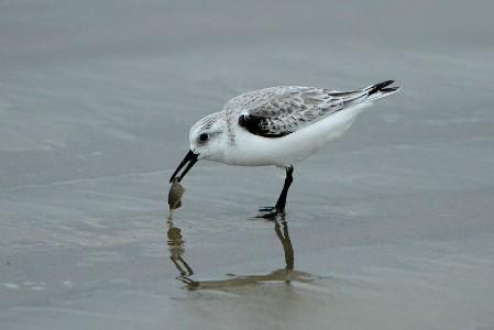 Wildlife spotting at Pismo Beach