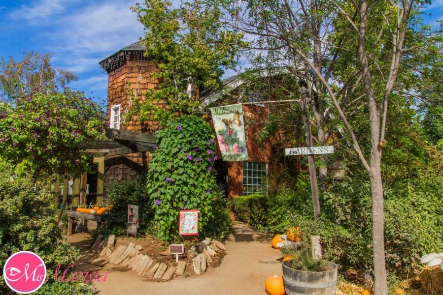 Best Maze: Summers Past Farms offers one of San Diego's best mazes and more