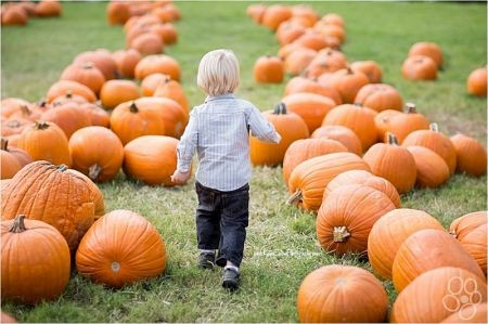 Pumpkin Patches to visit