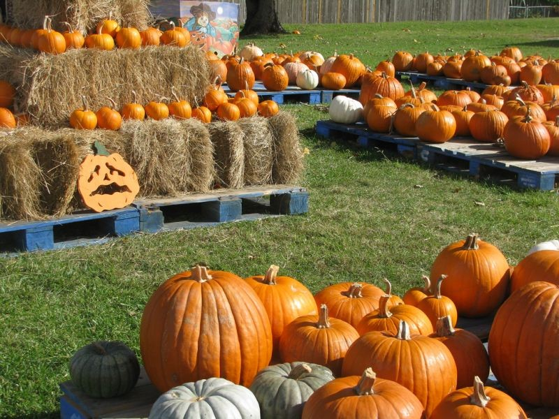 Best pumpkin patches to visit in south Florida