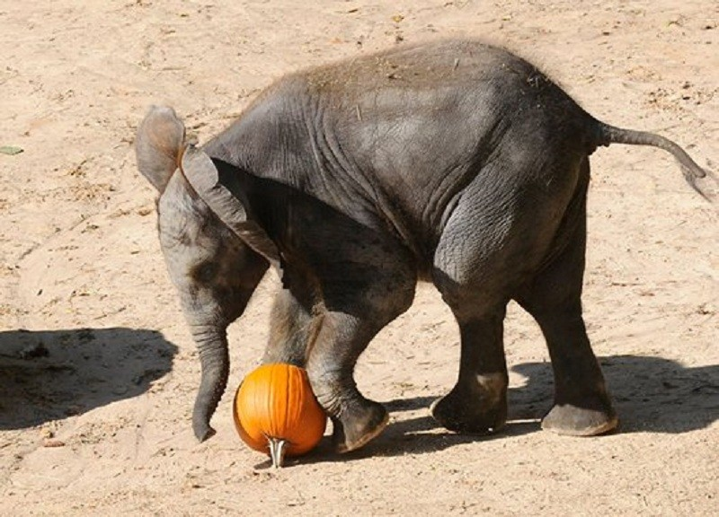 ZooBoooo: When humans and animals celebrate Halloween