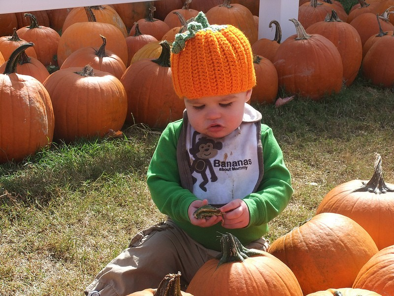 Maple Lane Farms: Corn maze, hay rides, and fall fun