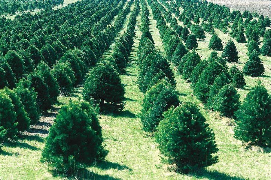 Tree Images Cincinnati Tree in Cincinnati