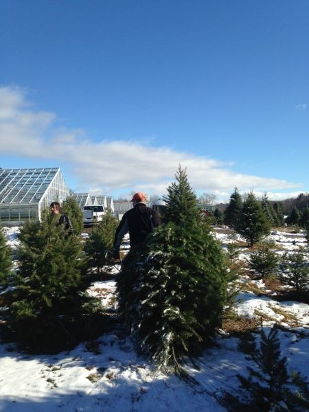 Best Places to cut down your own Christmas tree in New York - AXS