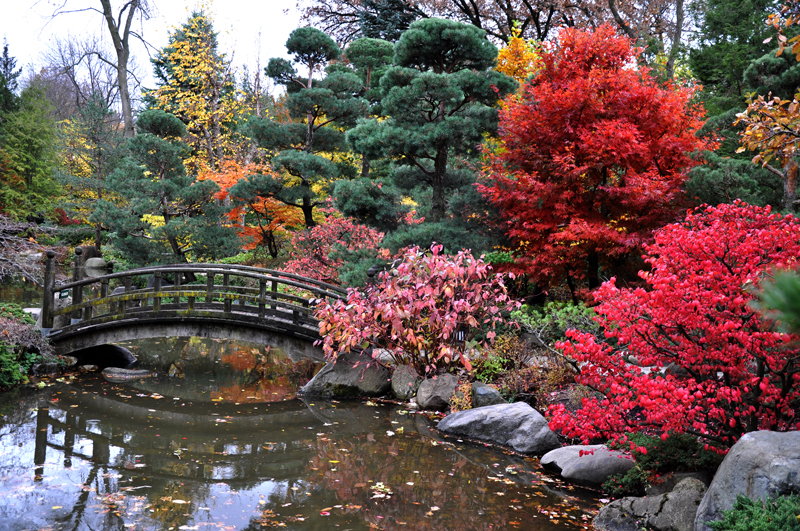 Anderson Japanese Gardens Opens For The Season Offers Concert Series Axs