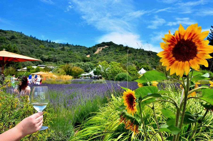 This was the view as soon as one entered the premises; sunflowers, lavender, blue skies, wine...