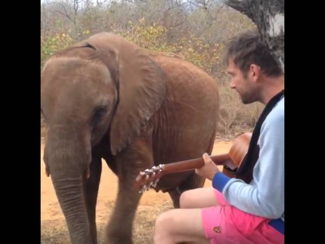 Watch: Damon Albarn performs 'Mr Tembo' for his elephant muse Mr Tembo
