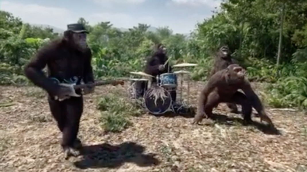 The ape Coldplay cover band