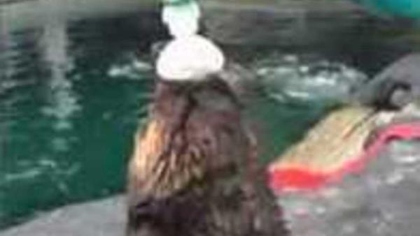 Animals to see at the Seattle Aquarium