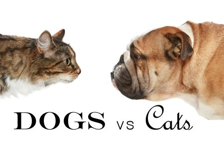 Stories on Stage: Dogs vs Cats