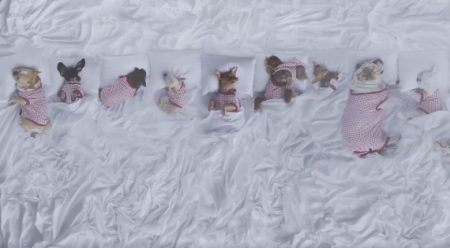 Watch: Instagram's most 'Famous' dogs parody Kanye West video in support of AIDS